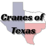 Cranes of Texas, LLC